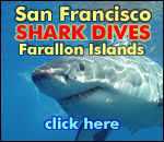Shark Diving in